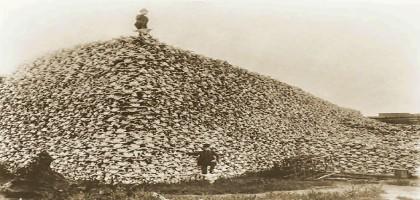 Crânes de bison en attente d'être transformé en engrais (vers 1870)