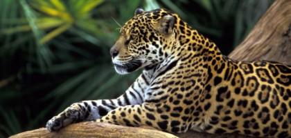 Bras de fer autour du pétrole en Amazonie
