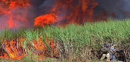 Agrocarburants : impacts au Sud ?
