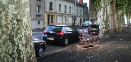 arbre-et-voiture