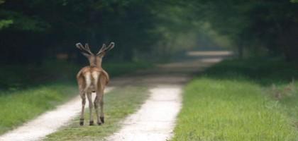 Non à l'asphaltage des chemins et des voies vertes