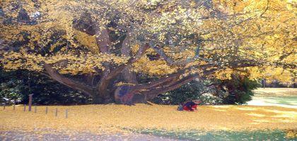 Un Jardin de la France en béton armé (4)