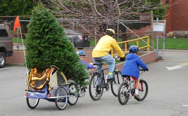 bike_tree