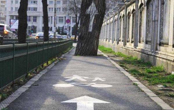 Agrémentez vos pistes cyclables d'arbres